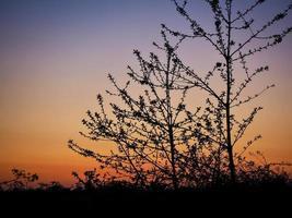 árboles jóvenes en silueta al atardecer foto