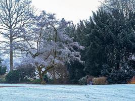 mañana nevada en un jardín foto