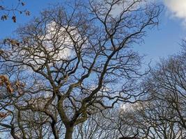 Ramas desnudas de invierno con un fondo de cielo azul foto