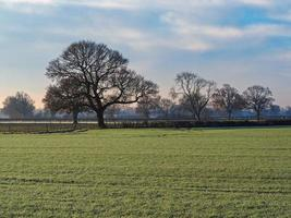 Bare tree in a field on a misty and frosty morning photo