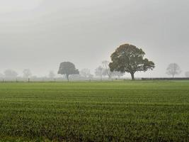 Trees and grassy field on a foggy morning photo