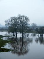 Winter trees reflected in a flooded field photo