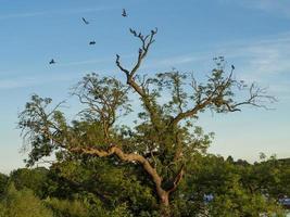 pájaros y un árbol foto