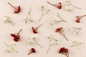 vista superior de flores en plano foto