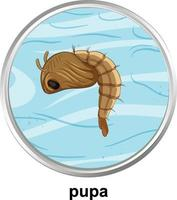 Top view of pupa mosquito on white background vector