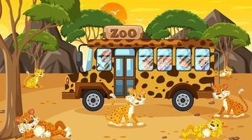 Safari al atardecer con muchos niños viendo un grupo de leopardos. vector