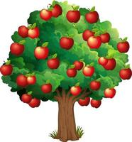 Red apples on a tree isolated on white background vector
