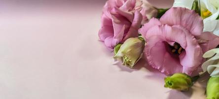 flores rosas rosadas y blancas con copyspace foto