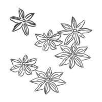 Dibujo de líneas vectoriales anís estrellado hecho a mano aislado sobre fondo blanco. bocetos de especias. dibujo vectorial de anís sobre un fondo blanco vector