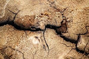 Wood cracks and texture photo