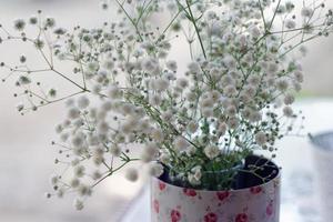 Little white flowers baby's breath photo