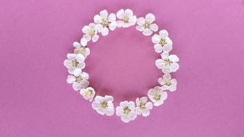Bloom in circle on pink background. Simple flat lay with pastel texture. Fashion eco concept. Stock photo. photo