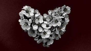 Heart of plum tree flowers in monochrome colors on dark red background. Can be used as banner, postcard, picture print, invitation design. Stock photo. photo