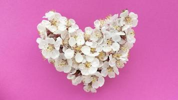 Heart of plum tree flowers on pastel texture pink background. Can be used as banner, postcard, picture print, invitation design. Stock photo. photo