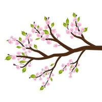 sakura cherry blossom flower leaf tree branch vector