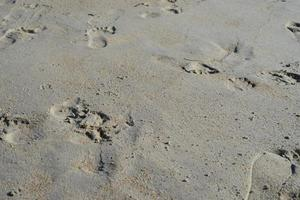 Footprints in sand photo