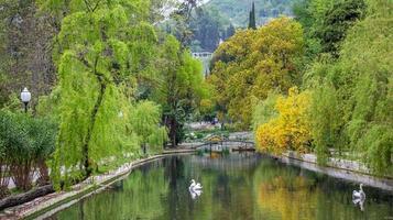 Cisnes en un estanque rodeado de árboles en un parque en New Athos, Abjasia foto