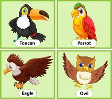 Educational English word card of birds set vector
