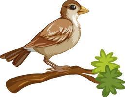 Personaje de dibujos animados de animales de un pájaro sobre fondo blanco. vector