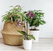 orquídeas y otras plantas de interior foto