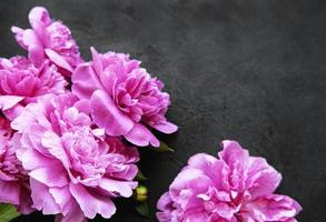 flores de peonía sobre un fondo negro foto