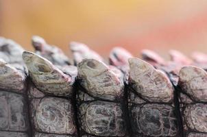 Patrón de detalle de piel de cocodrilo cocodrilo cerrar foto