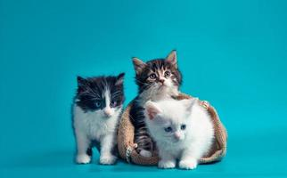 Two fluffy kittens in a sack and one next to the bag on a turquoise background