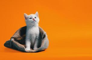 Gatito blanco en un saco sobre fondo naranja foto