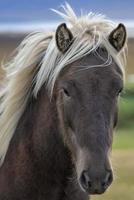 Close-up of a brown horse photo