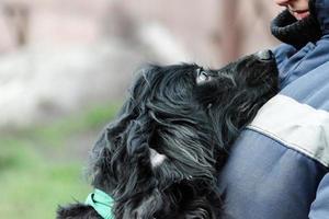 Perro negro de pelo largo mira fielmente a una mujer en uniforme de trabajo azul foto
