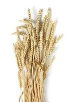 Sheaf of ears of wheat isolated on white background photo