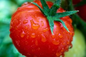 Close-up de un gran tomate rojo brillante foto