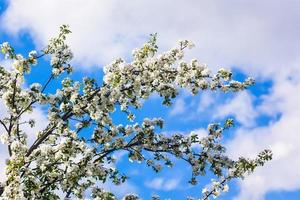 hermosas flores en primavera, flores delicadas macro foto