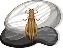 Top view of grasshopper on a stone on white background vector