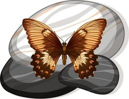 Top view of butterfly on a stone on white background vector
