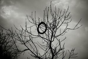 Black and white image of a bare tree with a bicycle tire on a branch. photo