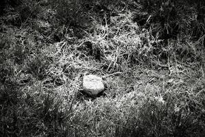 Poisoned grass background in black and white photo
