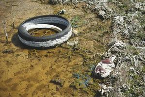 A thrown away tire in a puddle. A puddle polluted with chemicals and garbage. photo