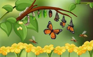 Blured nature background with life cycle of butterfly vector