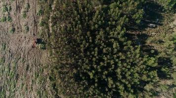 os efeitos do desmatamento