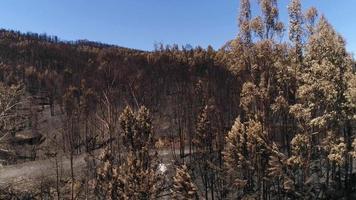 deforestación de un bosque por incendio video