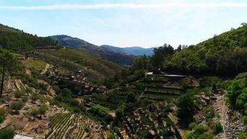viñedos en terrazas en el valle del río douro video