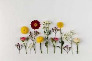 Colección de flores laicas planas sobre fondo blanco. foto