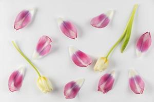 vista superior de pétalos de tulipán foto