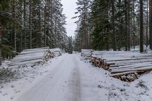 Pilas de madera a lo largo de una carretera de invierno en Suecia foto