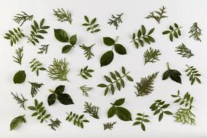 colección de hojas de vista superior foto