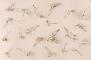 Baby's breath on tan background photo