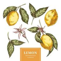 Lemons sketch collection in vintage style vector