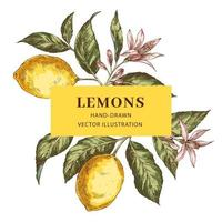 Frame with place for text with lemons vector
