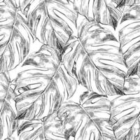 Seamless pattern with monstera leaves in sketch style vector